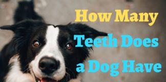 How Many Teeth Does a Dog Have