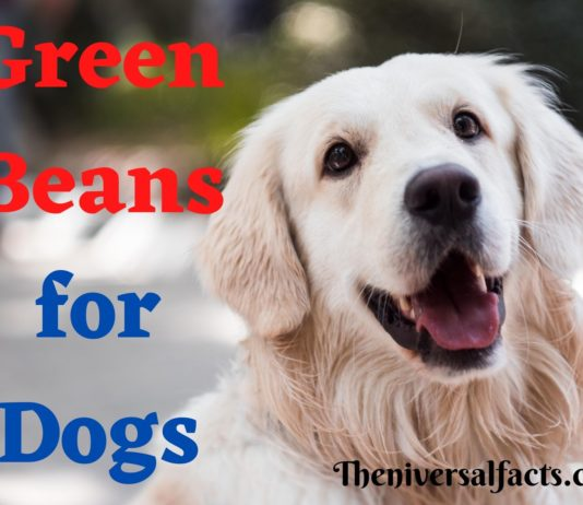 Green Beans for Dogs